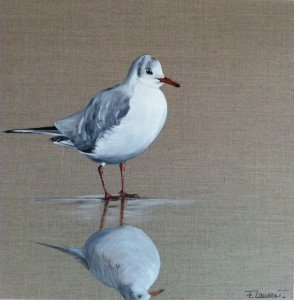 Mouette rieuse 50x50